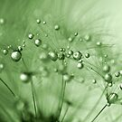 Green drops of dew by Caterpillar