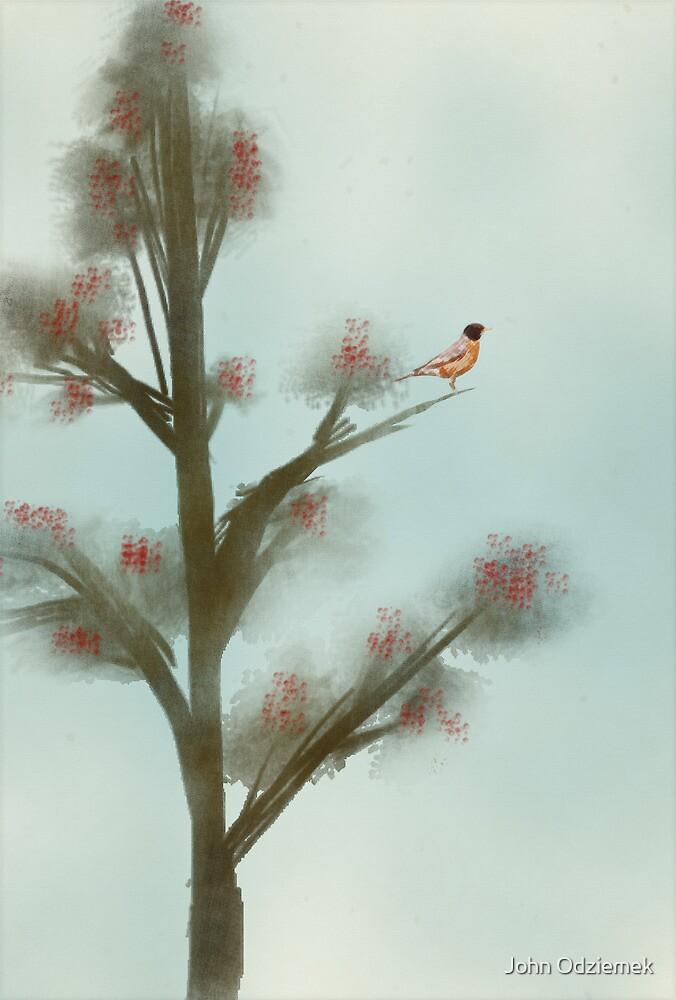 Robin in Tree by JohnOdz
