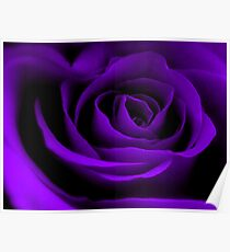 A Purple Rose. Poster