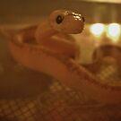 Aries The Snake by wordsplaytoday