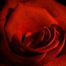 Scarlet Rose by Ann Garrett