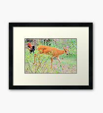 Rural Country Garden Framed Print