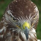 Evil look Eagle by Peter Barrett