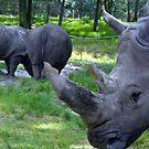 Close Encounter With A Rhino by Jane Neill-Hancock
