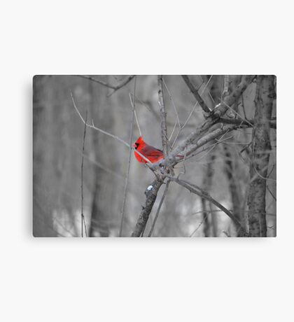A Spot of Red in the Land of Black and White Canvas Print