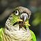 Birds Wearing Green Feathers