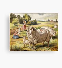 Vinage Picture of Sheep Canvas Print