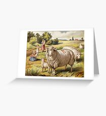 Vinage Picture of Sheep Greeting Card