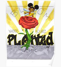 KINFfolkes-BLOOM WHERE YOU'RE PLANTED Poster