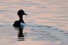 Tufted Duck by Neil Bygrave (NATURELENS)
