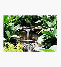 water feature at Fitzroy gardens Photographic Print