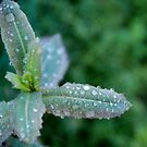 Freezing rain by Peter Dickinson