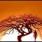 """""""Sunset on the Kalahari"""" by Julian Wilde"""