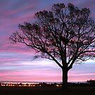 Pastel Skies At Dawn by JGetsinger