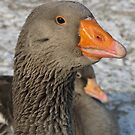 Goose in Sunshine by orko