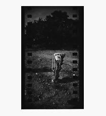 Lone Phone Photographic Print