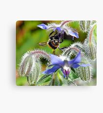 Borage & Bee Canvas Print