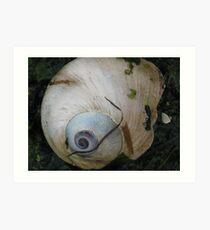 Moon Snail Shell Art Print