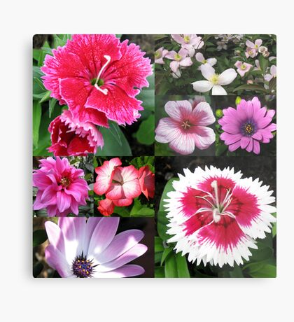Passionate about Pink - Floral Collage Metallbild
