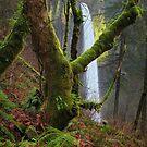 Latourell Falls I by Tula Top