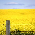 Alberta Prairies by Pam Hogg