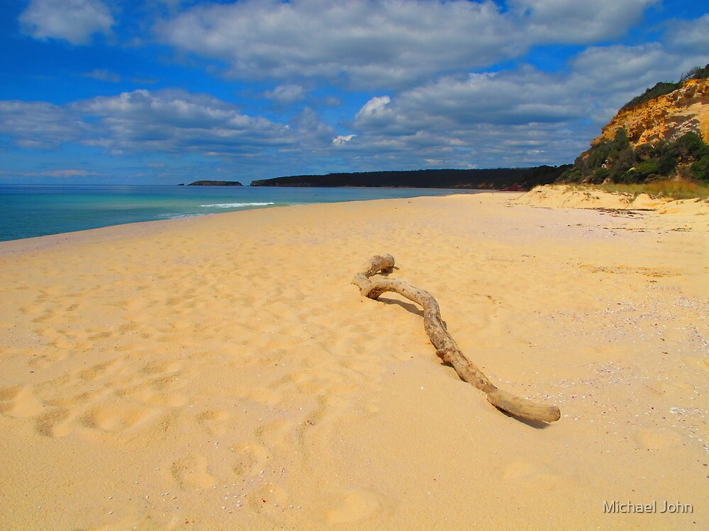 Beached Driftwood by Michael John