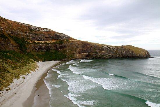 Penguin Beach by styles