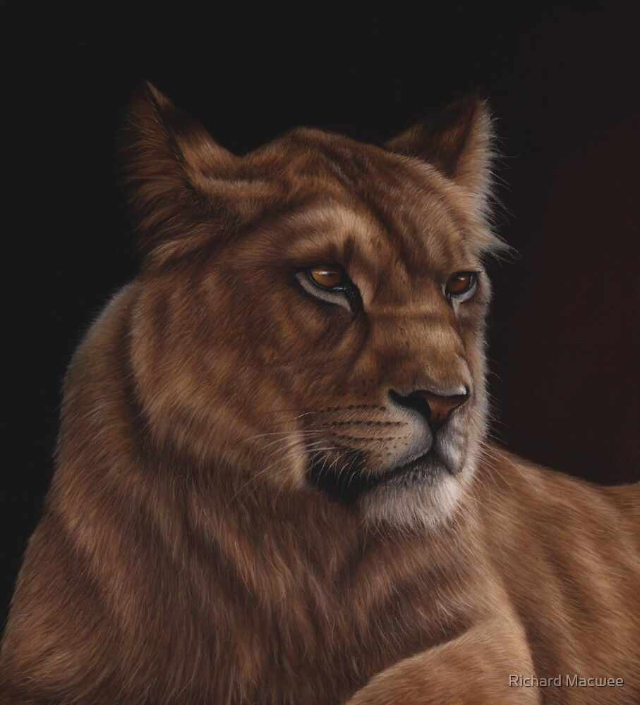 Wildlife artwork of a lioness by Richard Macwee