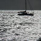 Moonlight Sailing by judygal