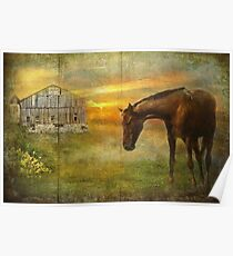 Barn and Horse On Barnboard Poster
