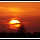 Golden Sun by Kevin Meldrum