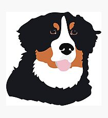 Bernese Mountain Dog Photographic Print