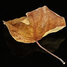 The Leaf by Michelle Cocking