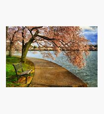 Meet Me At Our Bench Photographic Print
