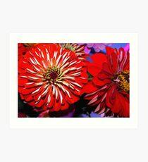 Red zinnias Art Print