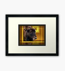Baby Buffalo Abstract Framed Print