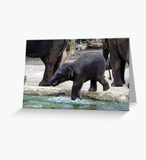 Baby Elephant Taronga Zoo Greeting Card