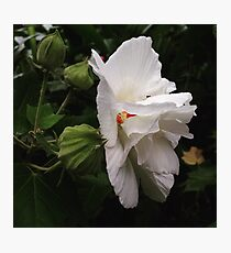 White Flower and Blossoms Photographic Print
