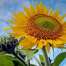Smile into the Sunshine by Clare Colins