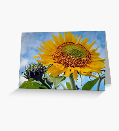 Smile into the Sunshine Greeting Card