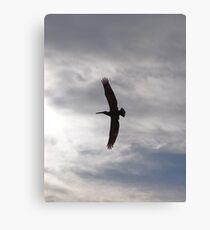 Flying Pelican - Pelícano Volando Canvas Print