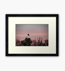 Great Blue Heron on Pink Sky Framed Print