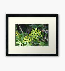 Flowers of Green Framed Print