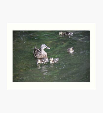 Duck with Ducklings Art Print