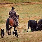 Rounding the herd by Judith Cahill
