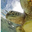 Hopeful turtle by Kara Murphy