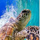 Determined turtle by Kara Murphy
