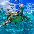 Turtle and sky by Kara Murphy