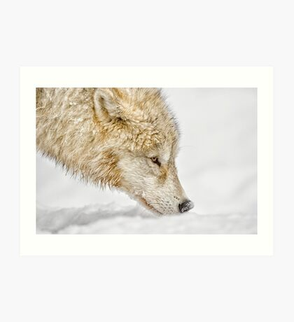 Nosing Around Art Print