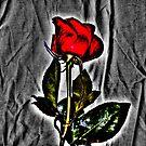 Rose by Euge  Sabo